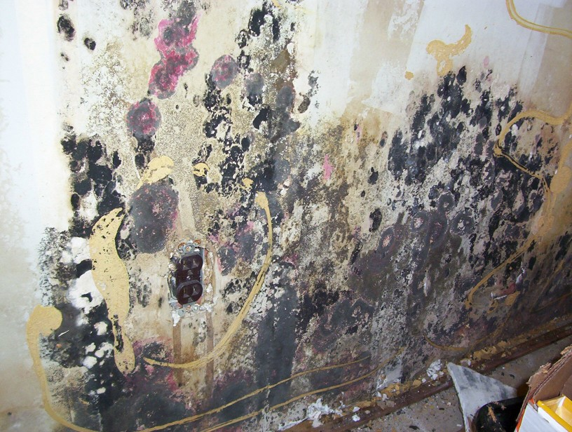 Image result for MOLD DANGEROUS