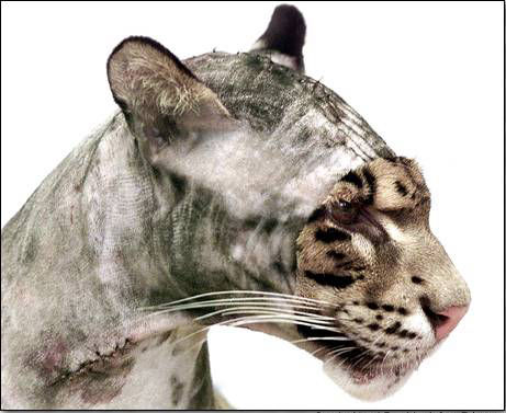 de tok cat shaved pussy