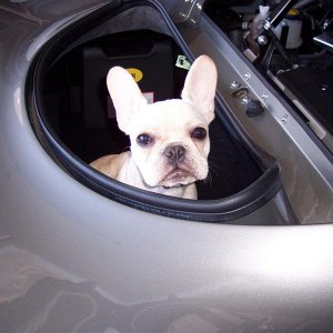 Frenchie Exige