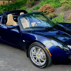 Pig's Nightfall Blue Elise