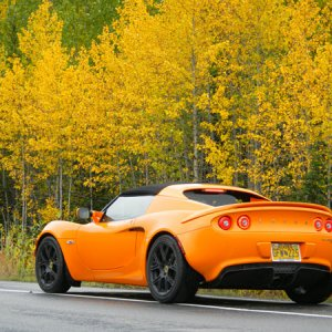 25781-lotus In The Fall